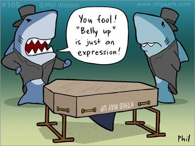 Shark belly up